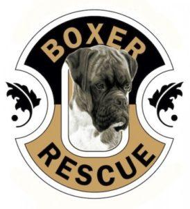 boxer-rescue