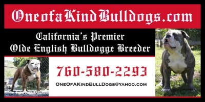 old-english-bulldog-breeders